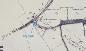 1806-roebuck-detail-2